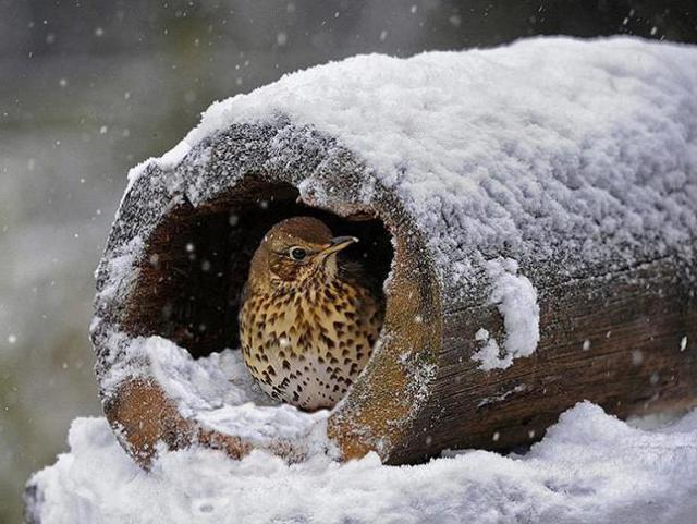 Как помочь животным в зимнее время? (для стенгазеты, сочинения) 2 класс