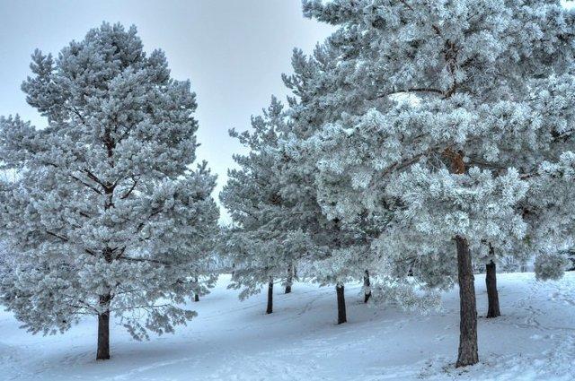 Сочинение на тему Деревья в снегу 6 класс