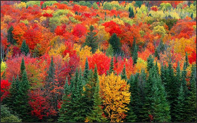 Сочинение на тему Осень в лесу (2, 3, 4, 5, 6 класс)