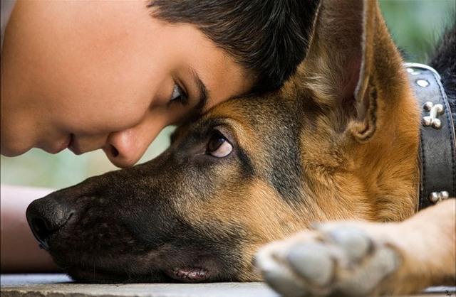 Собака - друг человека - сочинение