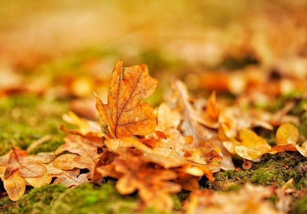 Мое любимое время года Осень сочинение