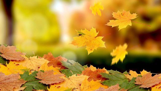 Золотая осень - сочинение