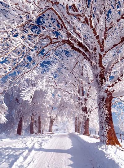 Сочинения про Зиму