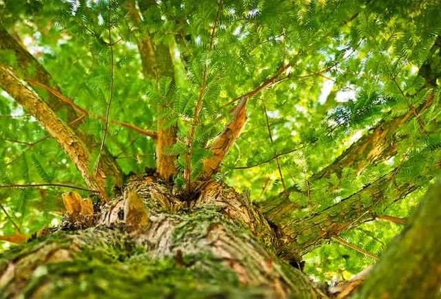 Сочинение на тему Весна в лесу