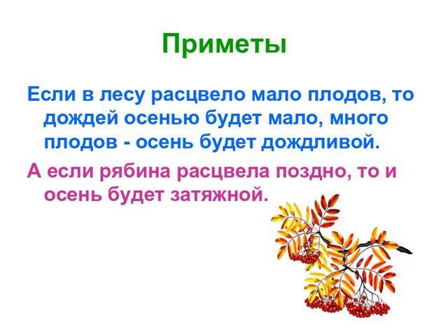 Сочинение по картине Полевая рябинка Рылова (2, 5 класс описание)