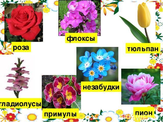 Сочинение про цветы 2, 3, 4, 5 класс
