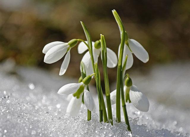 Сочинение Весна в моем городе 2, 3, 4, 6, 7, 8, 9 класс