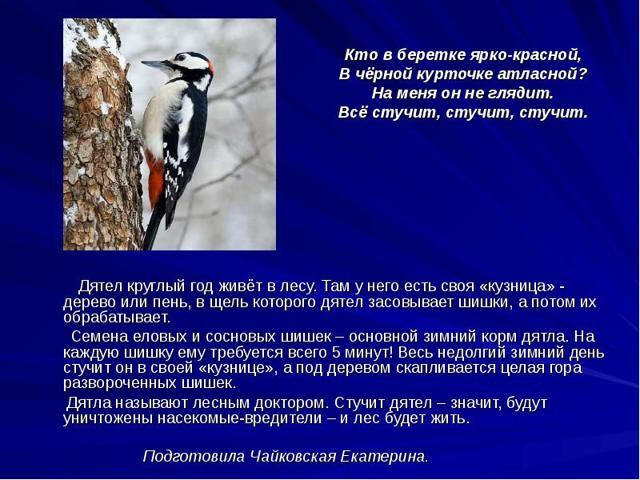 Птицы - наши друзья - сочинение
