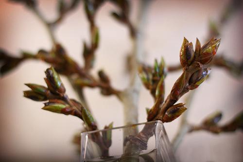 Наступила весна - сочинение