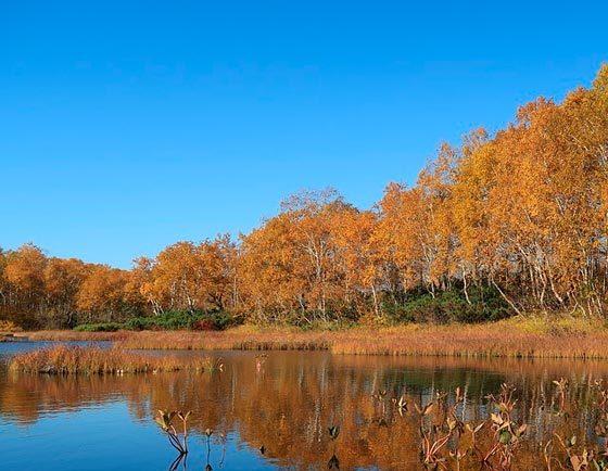 Описание картины Золотая осень Левитана сочинение