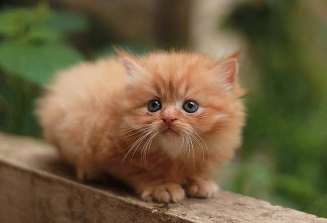Сочинение О домашнем животном (кошка)