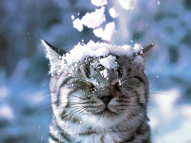 Сочинение про Зимний день