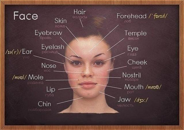 Описание внешности человека - сочинение