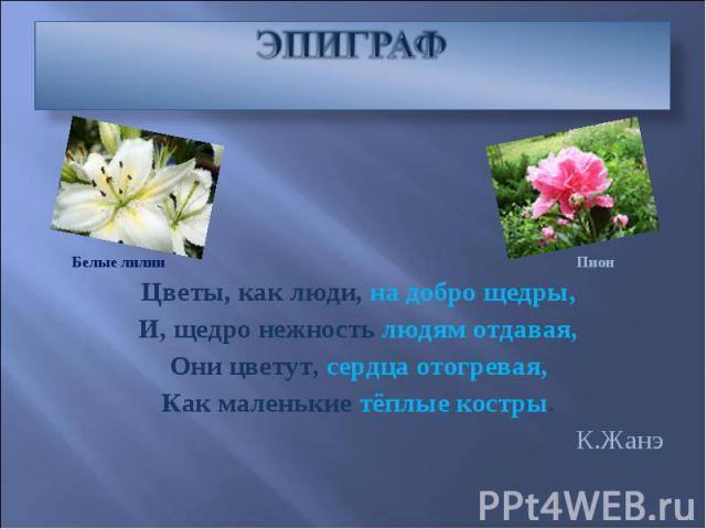 Сочинение Мой любимый цветок