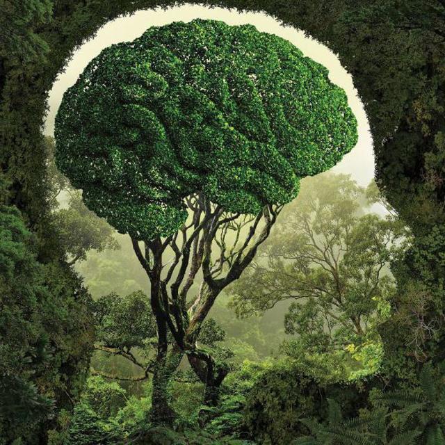 Влияние природы на человека - сочинение