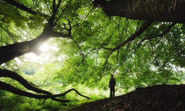 Любовь к природе - сочинение-рассуждение