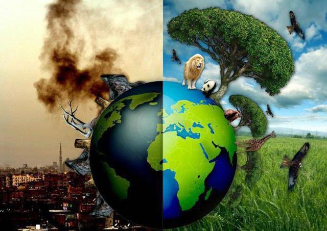 Сочинение Экологические проблемы