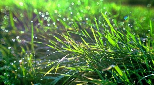 Сочинение на тему Летний дождь